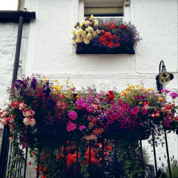 freetoedit photography flowers contrast colorful