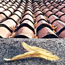 nature leaf hdr emotions photographynature
