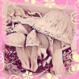 mushrooms wild mushroom cute nature freetoedit