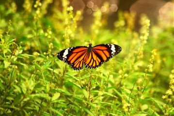 butterfly nature photography green freetoedit
