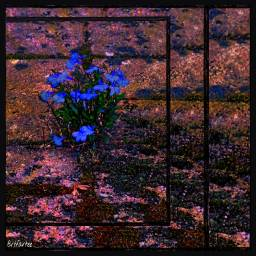 flowers photography lightmask squared travel