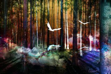 freetoedit edited colorful nature overlay