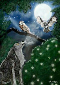 wdpnightsky colorsplash forest petsandanimals owls