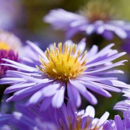 flower blossom garden gardenflower photography