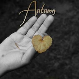 freetoedit reedited autumn