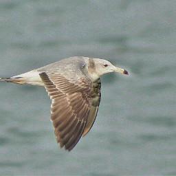 bird fly animals animal freetoedit
