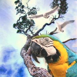 freetoedit sky parrot papagei tree