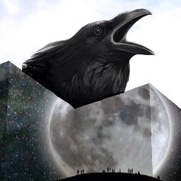 FreeToEdit crow moon wall