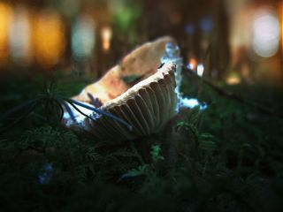 mushroom autumn autumncolors bokeh nature