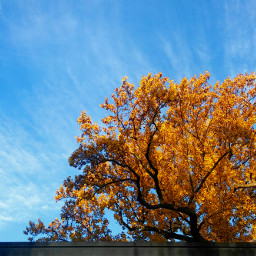 autumn sky freetoedit tree