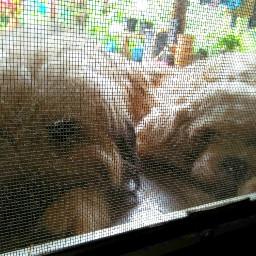 dog doglover stare twodog cutedog freetoedit