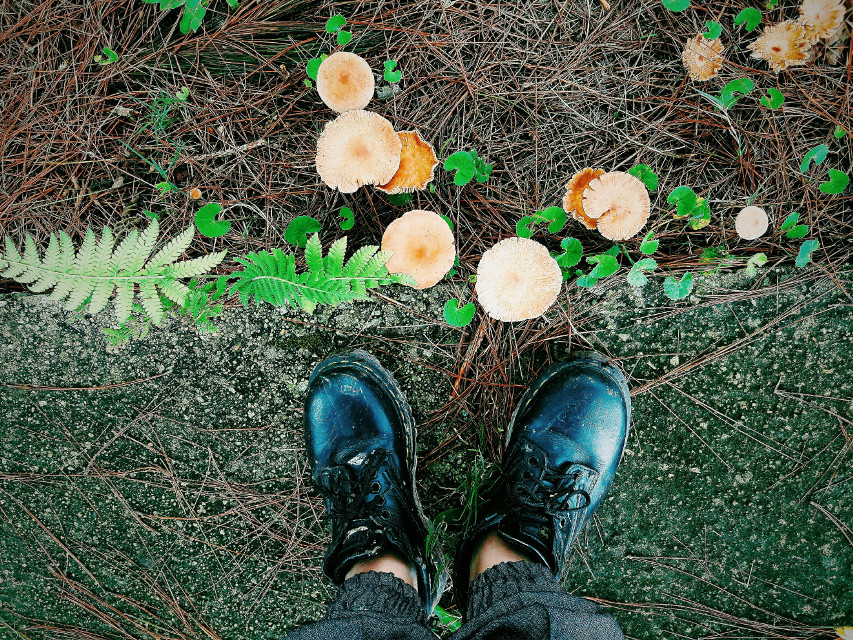 taken by my Galaxy phone #mushrooms #shoesoftheday #drmartenstyle #sneakerhead  #galaxya7 #samsunggalaxya7