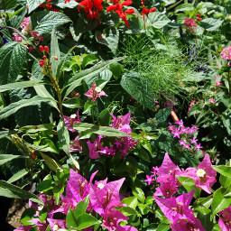 plantsandflowers plantphotography noedit colorful relaxedandhappy