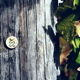 pa photography 22 vineyard outdoors dpcnumbers freetoedit
