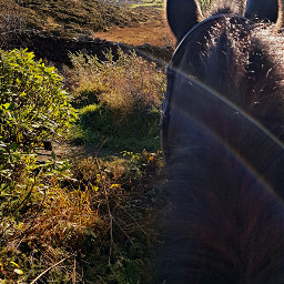 dpclandscape mournemountains home horse riding freetoedit