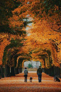 autumn picsart