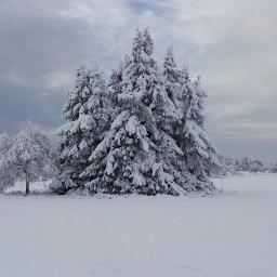 freetoedit winter snow white nature