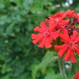 freetoedit фото фотографии цветы цветок
