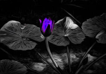 colorsplash cute flower blackandwhite hdr