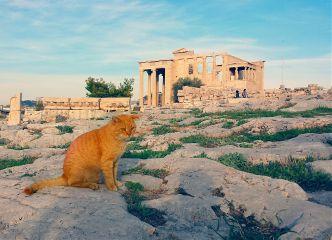 athens greece cat cats acropolis